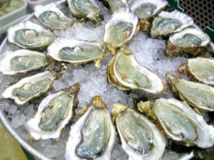 1107 Oysters