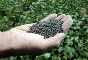 Many decades later, the use of biosolids for fertilizer is catching on