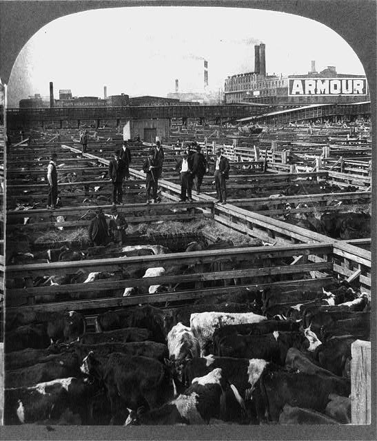 Chicago, Union Stockyards, 1908